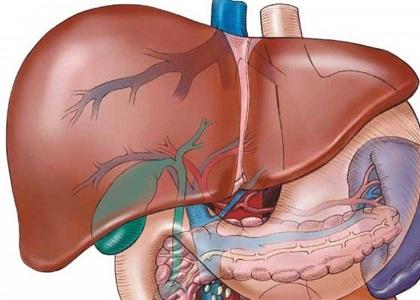 Gan có nhiệm vụ giải các chất độc hại, lọc máu và sản sinh các chất dinh dưỡng quan trọng... Khi bị xơ hóa, gan khó thực hiện các chức năng cần thiết cho cuộc sống và sức khỏe.