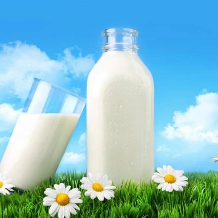 Sữa – nguồn cung cấp canxi, vitamin D, protein tốt nhất cho cơ thể.