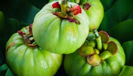 Giảm cân với quả Garcinia Cambogia