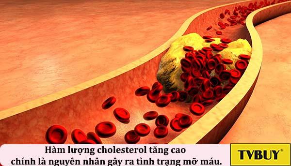 Hàm lượng cholesterol tăng cao chính là nguyên nhân gây ra tình trạng mỡ máu.