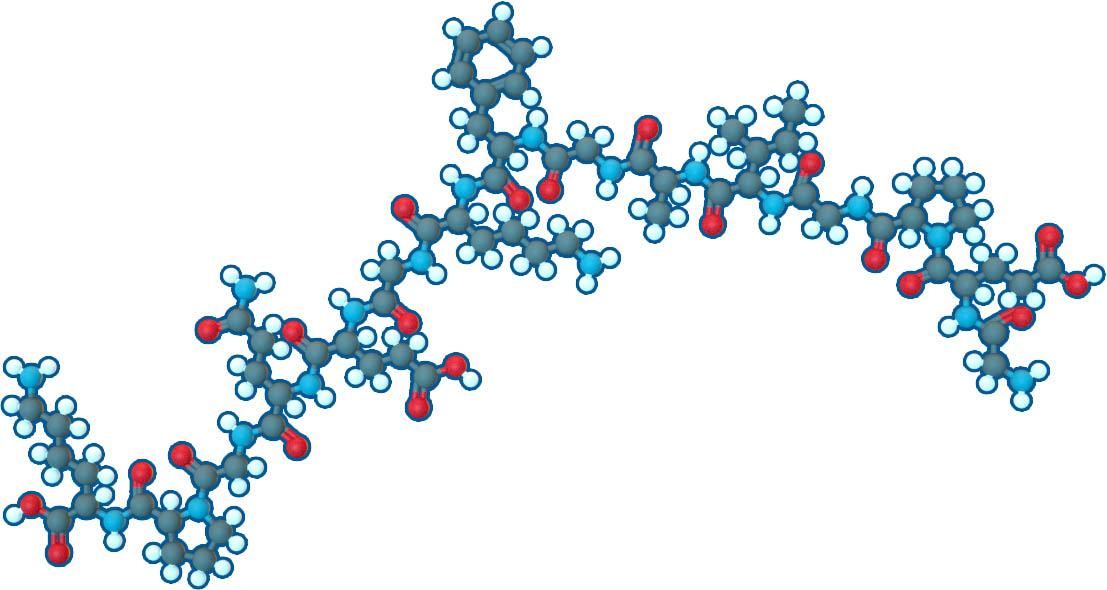 Collagen loại II là cơ sở cho sụn khớp và sụn hyaline, được hình thành bởi các homotrimers của chuỗi collagen, loại II, alpha 1