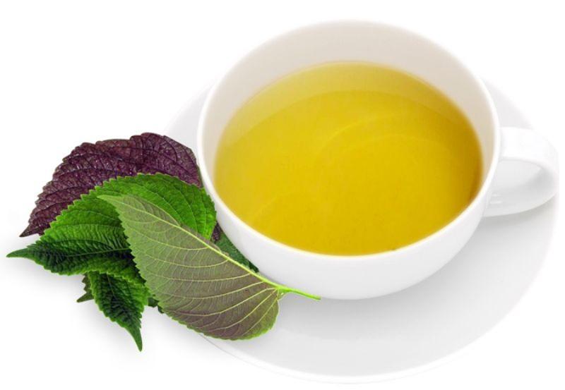 Cách chữa bệnh Gout từ rau tía tô