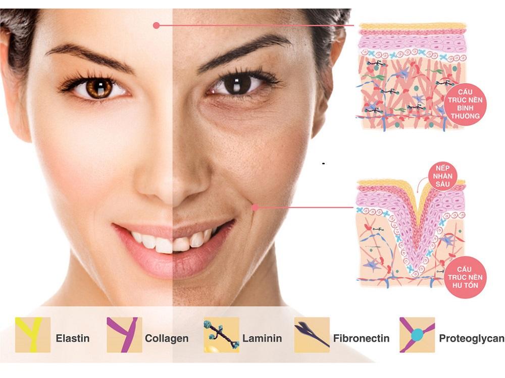 Mua collagen ở đâu là tốt giữa ma trận thực phẩm chức năng 03