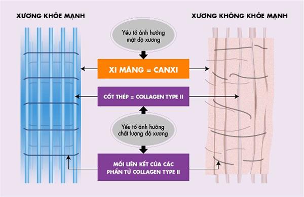 """Nếu ví, Canxi là """"xi măng"""" thì Collagen type II là """"sợt sắt"""" giúp xương chắc khỏe"""
