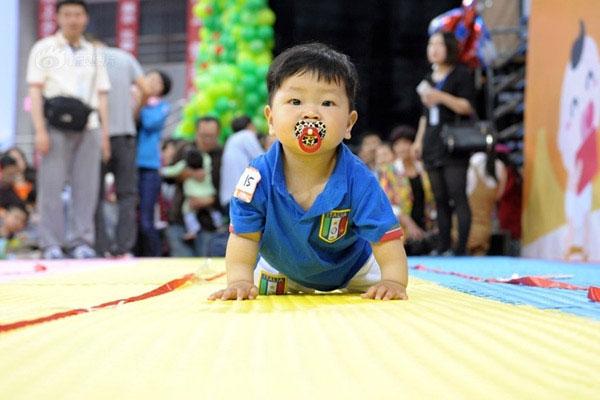 Trẻ em Nhật 1 tuổi được bố mẹ cho tham gia các cuộc thi bò