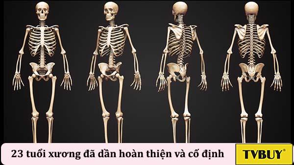 cốt hóa xương